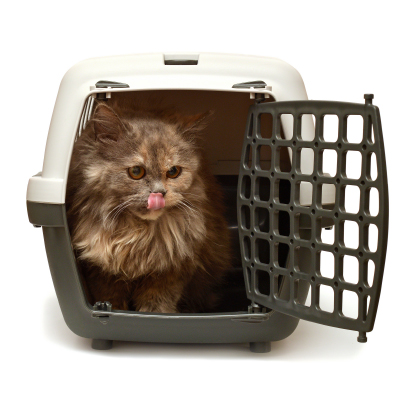 Brown cat in a cat carrier